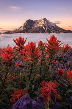 A rare cloud inversion during sunrise at Mt St Helens, Washington (OC)[1335x2000] @rosssvhphoto : EarthPorn