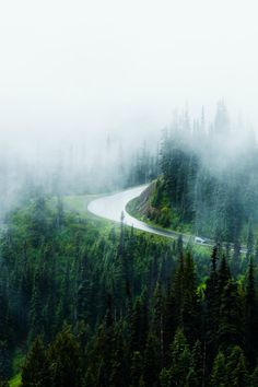 tulipnight:  The Road by Daniel / Timea K. Zilcsak