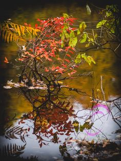 Ventured out today and created this photo that exemplifies our beautiful fall foliage. #dfunlife #autumn #fallfoliage #water #autumnleaves #mendonpondspark