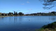 Vernonia Pond  -  April 2016