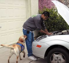 Man fixing car with hearing dog