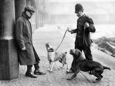 "Police dogs assisted in the apprehension of a ""suspect"", England, 1924 : TheWayWeWere New York Police, Federal Bureau, The Time Machine, Police Dogs, Law Enforcement, Detective, England, Animals, Vintage Photos"