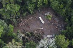 These Activists are Risking Their Lives and Using High-Tech to Stop Illegal Logging in the Amazon ~ http://www.wakingtimes.com/2014/10/18/activists-risking-lives-using-high-tech-to-stop-illegal-logging-amazon/