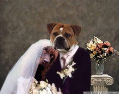 two dogs getting married...how sweet! hahaha
