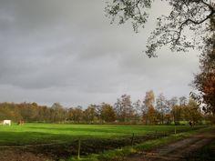 Herfst in de Friese wouden.