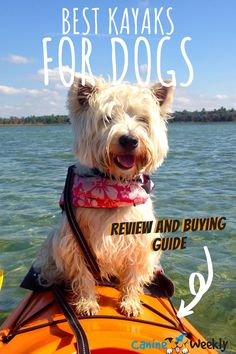 If you're considering going kayaking with your dog, you need to make sure that you have the right kayak for you and your four-legged friend to share together. There are a lot of kayaks on the market, in lots of different styles, so we've put together a list of seven that we think are really good for you and your dog. #dogkayak #fun #adventuringwithyourdog #dogtravel #buyingguide #best
