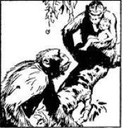 Tarzan dos macacos - desenho de Harold Foster - imagem 1