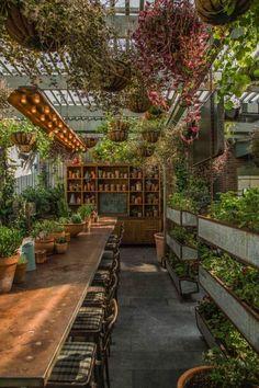 Indoor garden meets dining room