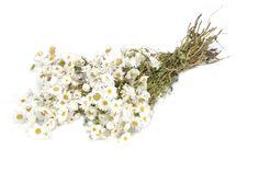 Rodanthe natural white