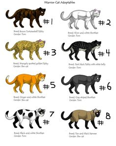 warrior cat pictures and names warrior cats adoptables by