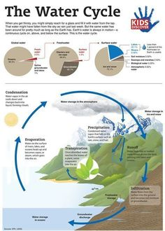 Water cycle for kids, water cycle diagram, environmental education, element Environmental Education, Science Education, Teaching Science, Teaching Kids, Forensic Science, Physical Science, Higher Education, Teacher Education, Middle School Science