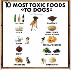 Very useful tip for our furry family member (s). #pets #dogs #tips #health
