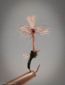 Dandelion Emerger