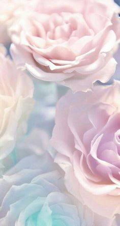 Ideas flowers wallpaper iphone spring phone backgrounds for 2019 Wallpaper Pastel, Flower Wallpaper, Nature Wallpaper, Cool Wallpaper, Mobile Wallpaper, 2017 Wallpaper, Trendy Wallpaper, Wallpaper Ideas, White Roses Wallpaper