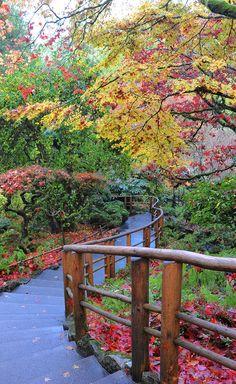 Fall colours at the Butchart Gardens in Victoria #fall #VictoriaBOO #autumn #exploreVictoria | www.tourismvictoria.com