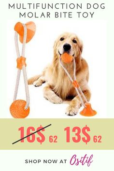 【PREMIUM QUALITY MATERIAL】GOCHANGE Pet Molar Bite Toy is made of environmental friendly material --- food-grade TPR, odorless, non-toxic rubber, safe and harmless to your love pet. Durable and wear-resistant. This dog chew ball toy is particularly suitable more for small puppies and medium size dogs. Large dogs above 18KG are not recommended. #dogplay【POWERFUL SUCTION DESIGN】#dogsupplies【MULTIFUNCTIONAL INTERACTIVE TOY】#toyfordog【A TOY WITH GREAT BOUNCY】【24 HOURS OF CUSTOMERS… Cat Gifts, Dog Lover Gifts, Dog Lovers, Dog Birthday Gift, Animal Birthday, Big Dog Little Dog, Funny Animal Videos, Funny Animals, Dog Accesories