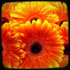 Gloriously autumnal #autumn #orange #gerbera #nature #flowers #fareham #florist #moonstone