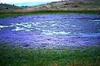 vernal pool in meadow
