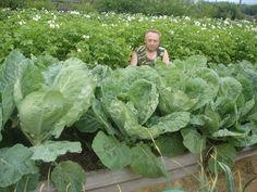 Un agricultor foarte talentat... Mi-a placut metoda sa - Pentru Ea Home Vegetable Garden, Pergola Patio, Growing Vegetables, Country Life, Ecology, Beautiful Landscapes, Lettuce, Outdoor Gardens, Garden Design
