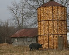 corn crib img_4769 (Modified) by tjacobs61, via Flickr