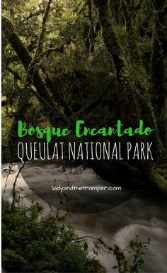 The Bosque Encantado is located in Queulat National Park on the Carretera Austral in Southern Chile. Find out what to do in Queulat and about the Bosque Encantado hike here.