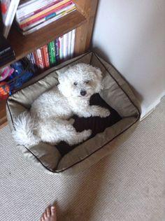 Got a new dog bed