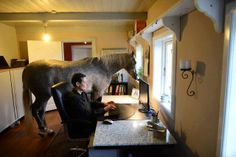 In Germany during the winter storm Xavier, this woman was concerned about the horse staying outside in the stables, so she let it stay inside her house...