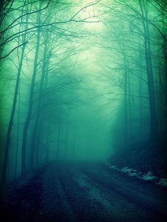 Misty forest, looks otherworldly.