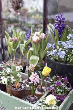 Giardino di flusso: Prima parte - Un nuovo anno in giardino