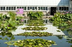 For all the wabi-sabi of the surrounding stands of lotus, you'll find symmetry if you catch the Water Lily Pool from just the right angle.