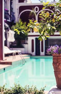 . Citrus Trees, Resort Spa, Pools, Beach, Outdoor Decor, Fruit, Home Decor, Swimming Pools, Seaside