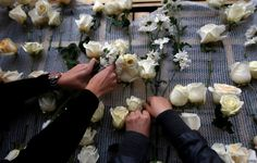 Women place roses on the agriculture building in Bogota as tribute to Colombia's President Juan Manuel Santos after he won the Nobel Peace Prize.