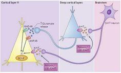 Effects of psilocybin