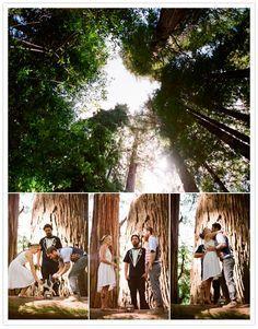 Redwood Forest Wedding on Pinterest