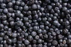How to Grow Blueberry Plants From Seed (using frozen blueberries)