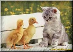 We used to get baby duck or chicks for Easter