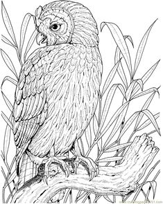 Free Color Pages Owls