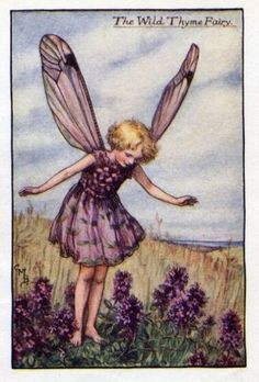 Wild Thyme Flower Fairy - pinner has lots of similar cards on her board