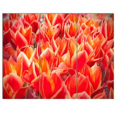DesignArt 'Tulip Flowers in the Keukenhof Park' 3 Piece Photographic Print on Wrapped Canvas Set