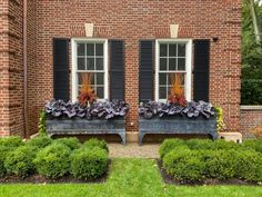 observations of a landscape designer Fall Plants, Green Plants, Tropical Plants, Porch Plants, Outdoor Christmas Planters, Christmas Urns, Outdoor Pots, Outdoor Living, Christmas Decorations
