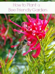 Tips to make the bees in your area feel welcomed and comfortable when you plant a bee friendly garden, and enjoy having them pollinate your plants! Love Flowers, Wild Flowers, Bee Attracting Flowers, Bee Friendly Flowers, Types Of Insects, Garden Guide, Garden Ideas, Butterfly Bush, Natural Garden