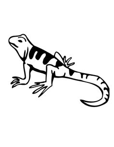 Lizard Coloring Pages Printable For Kids