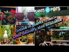 Plant shopping in Aluva   NGO based Plant shop   Plants in pots shop Aluva - YouTube Garden Online, Potted Plants, Pots, Nursery, Gardening, Base, Youtube, Shopping, Pot Plants