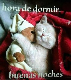 Verano Tutorial and Ideas Good Night Messages, Good Night Quotes, Gods Love Quotes, High School Musical, Cute Cats And Kittens, Spanish Quotes, Tutorial, Dog Cat, Qoutes