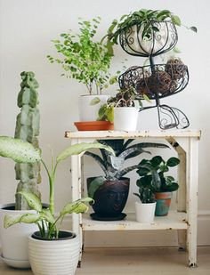 9 Ways Not to Kill Your Houseplants via @PureWow