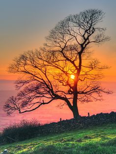 Sunset in Somerset, England Beautiful World, Beautiful Places, Beautiful Sunrise, Sunset Photography, Pretty Pictures, Beautiful Landscapes, Wonders Of The World, Scenery, Somerset England