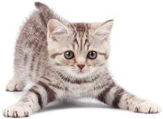 Kittens for Sale in Perth & Pet Shop | Midland Pet & Aquarium Centre