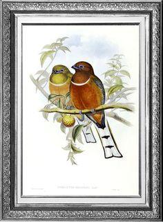Birds in Love vintage illustration printed on by DejaVuPrintStore, $9.90