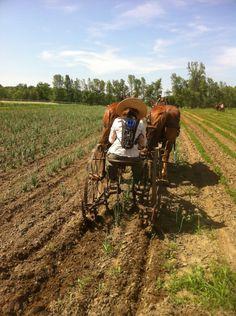 Kristin Kimball's 'Essex Farm' blog...       -------      http://www.kristinkimball.com/blog