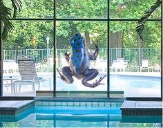 Blue Frog Glass Wall Decals for Windows, Showers, Bathroom - Kids or Adults
